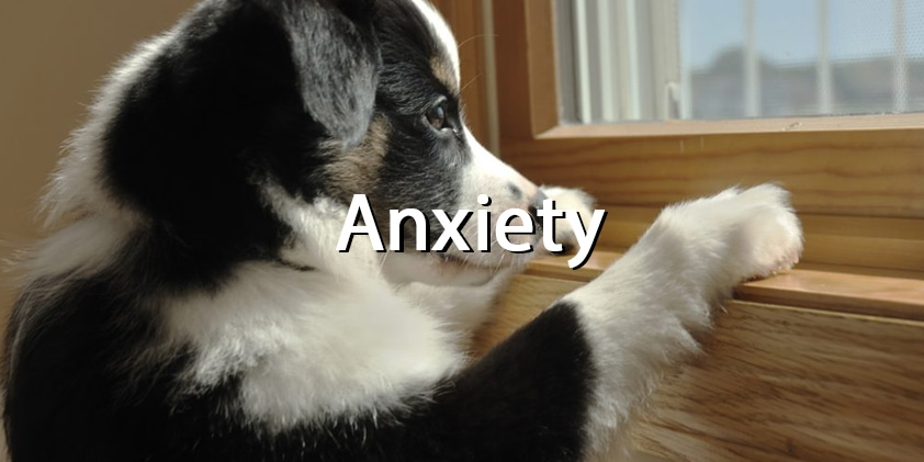 CBD Oil and Pets' Anxiety